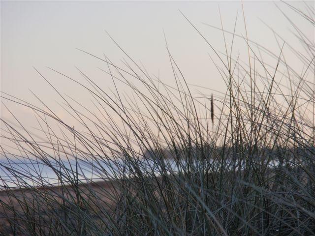 Gräser am Ostseestrand